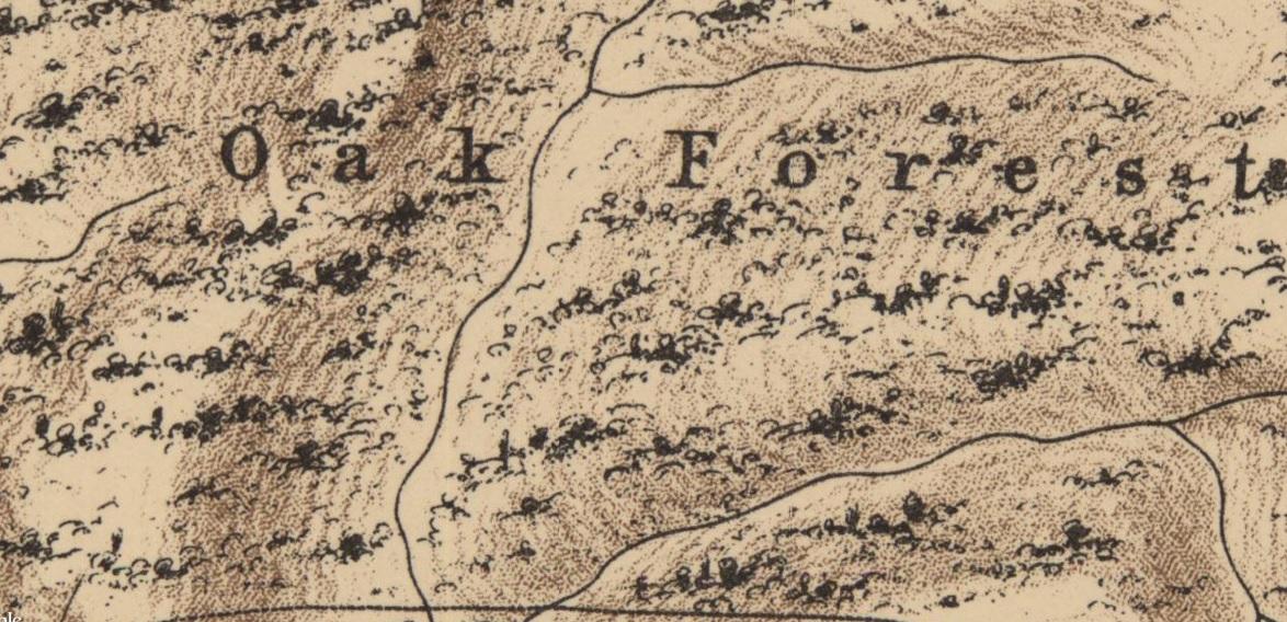 מפה ישנה של אזור השרון בארץ ישראל ויער האלונים שהיה בה